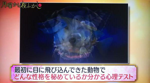 日本テレビ「月曜から夜ふかし」で木田真也先生監修の心理テストが紹介!