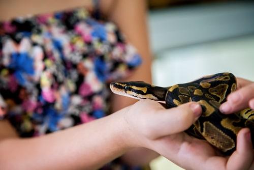 女性が蛇を持っている画像