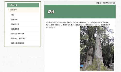 八幡神社の逆杉